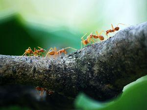 Pest Control Solutions for Your Collingwood Home