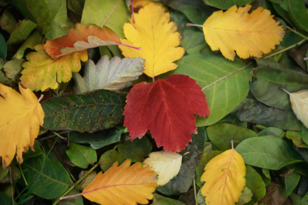 Gardening Jobs for the Fall