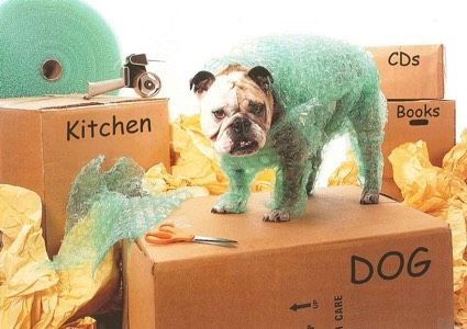 Move Pets to your New Home in Collingwood Yourself