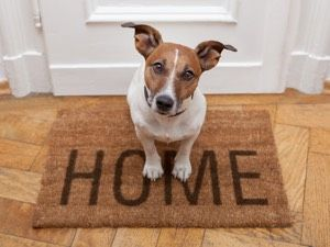 Moving Pets to Your New Collingwood Home